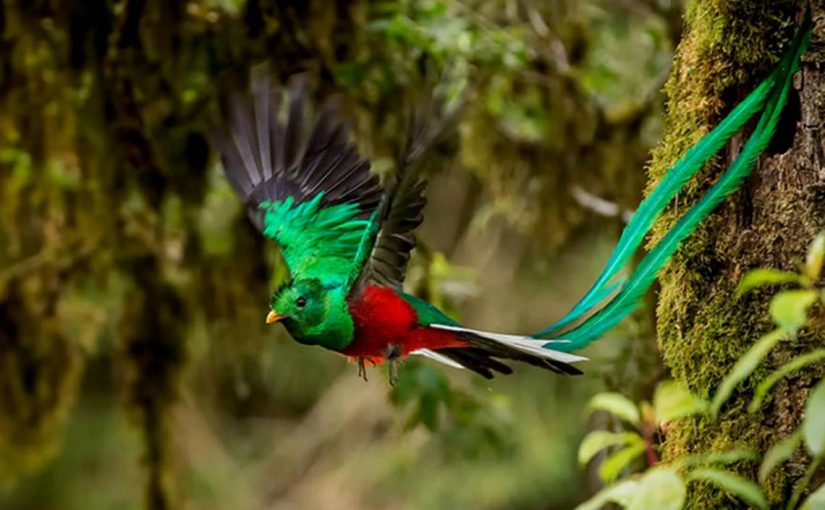 Learn about birdwatching in Guatemala